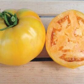 Golden Jubilee, Tomato Seeds