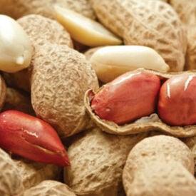 Jumbo, Peanut Seeds