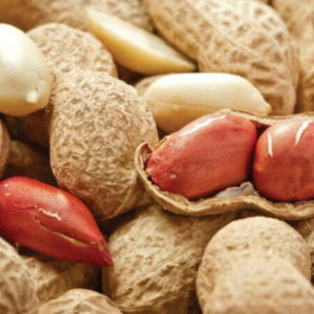 Jumbo, Peanut Seeds - Packet (1 oz.) image number null
