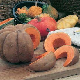 Musquee de Provence, Pumpkin Seeds