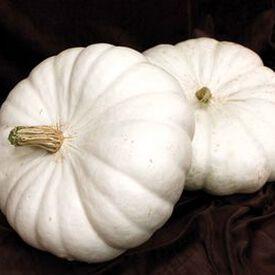 White Flat Boer Ford, Pumpkin Seeds