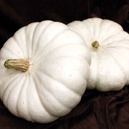 White Flat Boer Ford, Pumpkin Seeds - Packet image number null