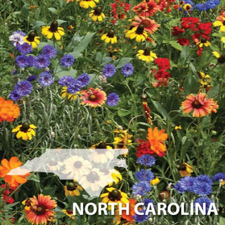 North Carolina Blend, Wildflower Seed - 1 Ounce image number null