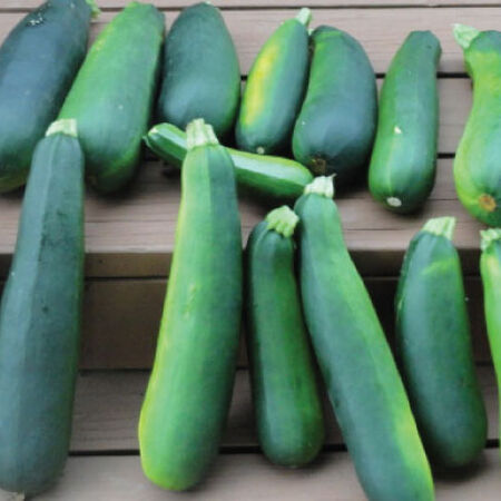 Black Beauty, Zucchini Seeds image number null