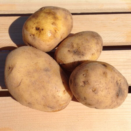German Butterball, Seed Potatoes image number null