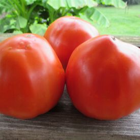 Italian Heirloom, Tomato Seeds