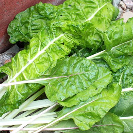 Lucullus, Swiss Chard Seeds - Packet image number null