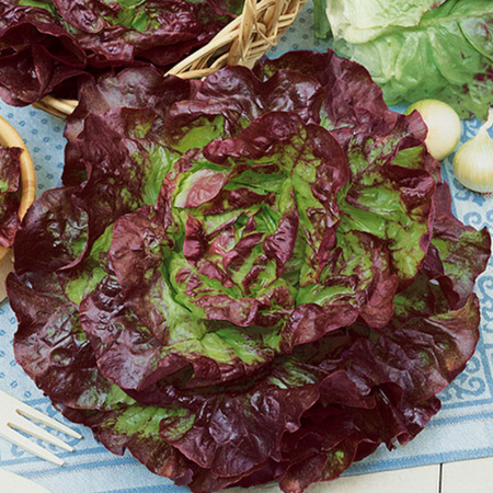 Carmona Red, Lettuce Seeds image number null
