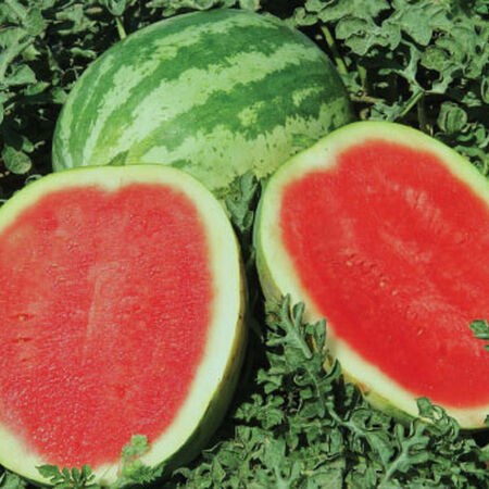 Sweet Trip Seedless, Watermelon Seeds image number null