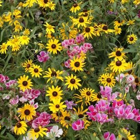 Mountain Native Blend, Wildflower Seed