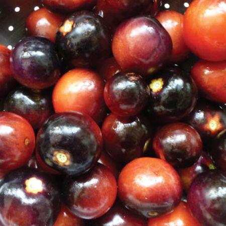 Indigo Rose, Tomato Seeds - Packet image number null