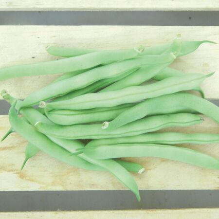 Tendergreen Improved, Bean Seeds image number null