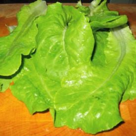 Buttercrunch, Lettuce Seeds