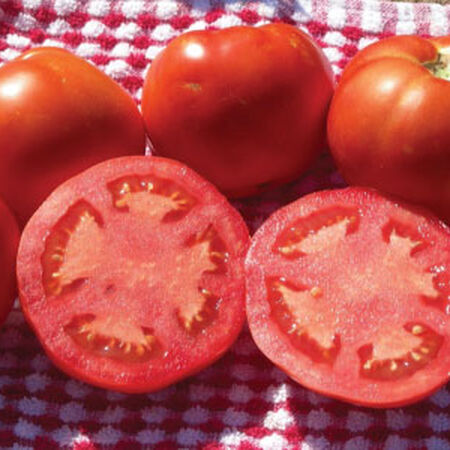 Floradade, Tomato Seeds - Packet image number null