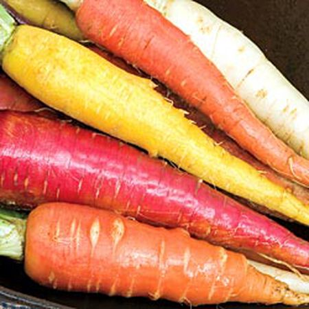 Rainbow Mix, Carrot Seeds - Packet image number null