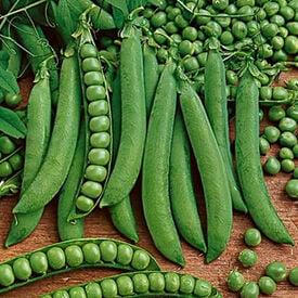 Green Arrow, Pea Seeds