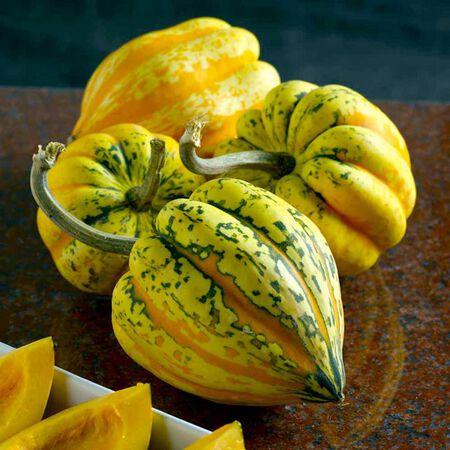 Festival Winter, (F1) Squash Seeds image number null