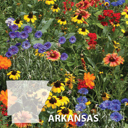 Arkansas Blend, Wildflower Seed - 1 Ounce image number null