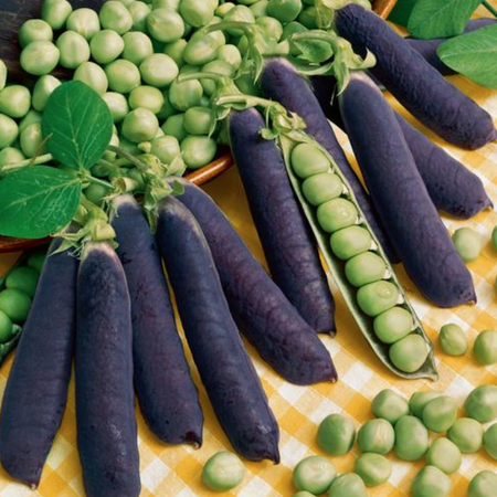 Blue Shelling, Organic Pea Seeds image number null