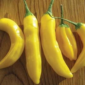 Lemon Drop, Pepper Seeds