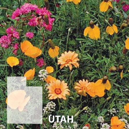 Utah Blend, Wildflower Seed - 1 Ounce image number null