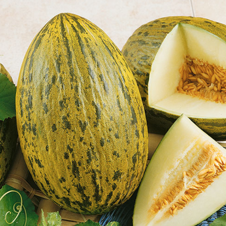 Piel De Sapo, Cantaloupe Seeds - Packet image number null