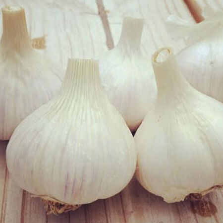 German White, Garlic Bulbs image number null