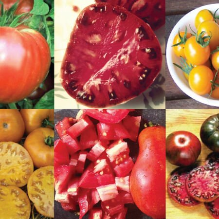 Best Tasting Collection, Tomato Seeds - Collection image number null
