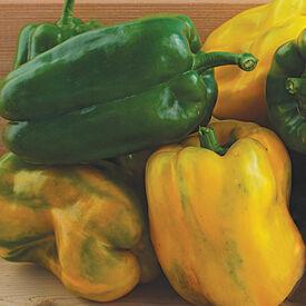 Yellow Monster, Pepper Seeds