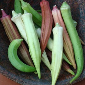 Rainbow Fiesta, Okra Seeds