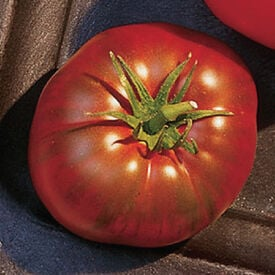 Paul Robeson, Tomato Seeds