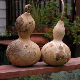 Birdhouse, Gourd Seeds