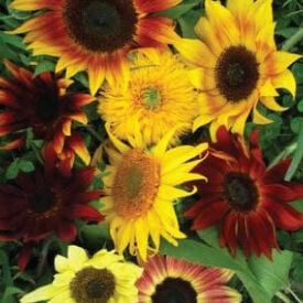 All Sorts Mix, Sunflower Seeds
