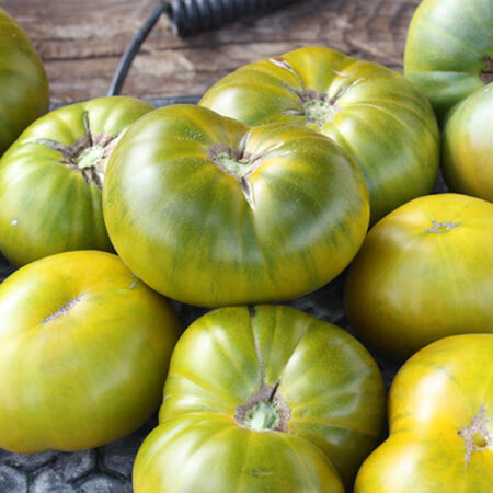 Tasty Evergreen, Tomato Seeds image number null