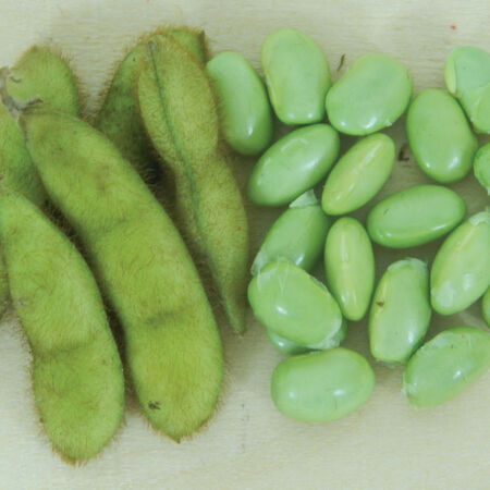 Envy, Bean Seeds image number null
