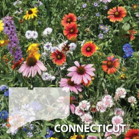 Connecticut Blend, Wildflower Seed - 1 Ounce image number null