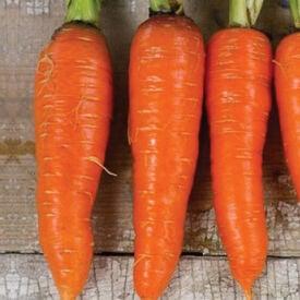 Kuroda Shin, Carrot Seeds