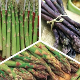 Popular Mix, Asparagus Roots