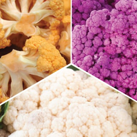Colorful Mix, Cauliflower Seeds image number null