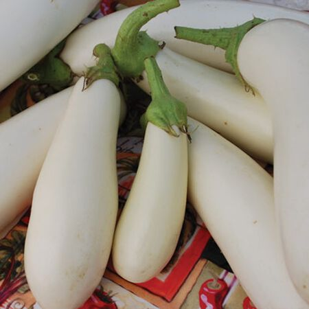 Casper, Eggplant Seeds - Packet image number null