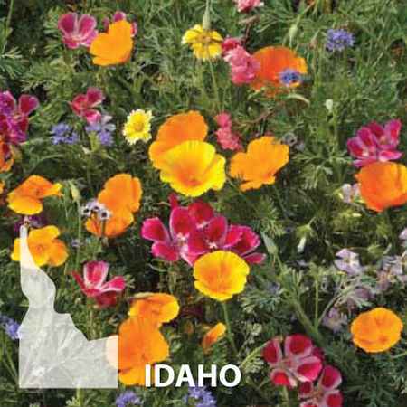 Idaho Blend, Wildflower Seed - 1 Ounce image number null