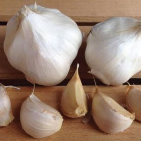 California Early, Garlic Seed