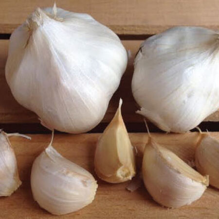 California Early, Garlic Seed image number null