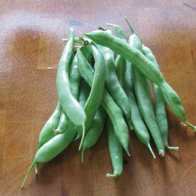 Mountaineer White Half Runner, Bean Seeds