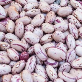 Taylor Dwarf Horticultural, Bean Seeds