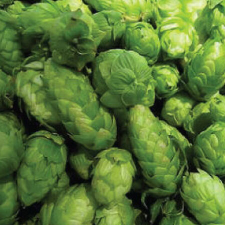 Common, Humulus (Hops) Seeds - Packet image number null