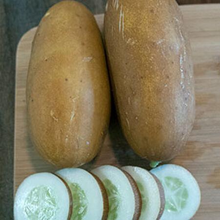 Seeds from Russia Lukoshko F1 Cucumber