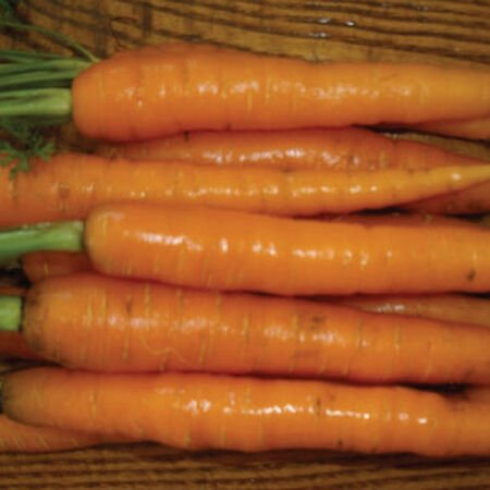 Scarlet Nantes, Carrot Seeds - Packet image number null