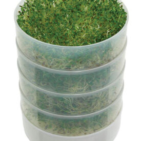 4 Tray Seed Sprouter, Sprouts