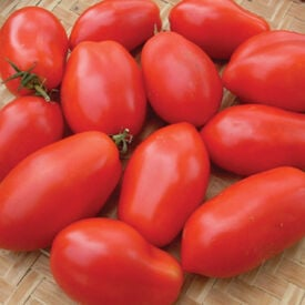 Napoli, Tomato Seeds